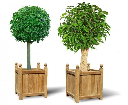 pair-of-large-wooden-versailles-planters-large-wooden-garden-planters-lindseyteak